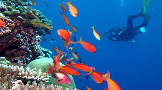Diving at Kandima Maldives